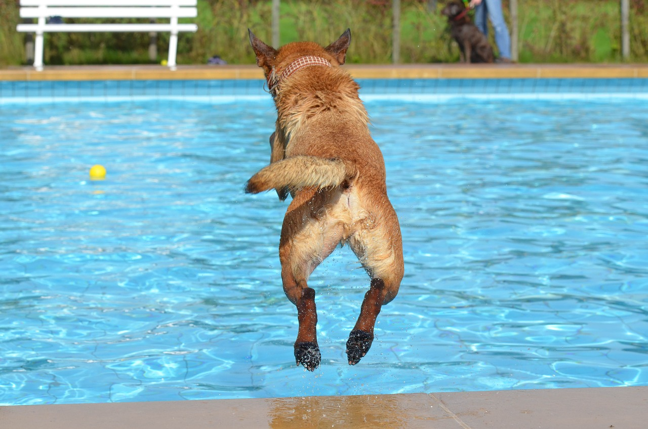 hond in de zomer
